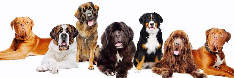 Комплексное ДНК исследование на наследственные заболевания у пород собак