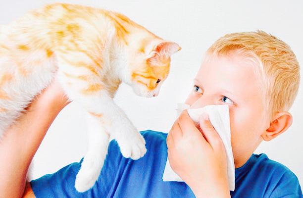 ДНК анализ на гипоаллерген у кошек